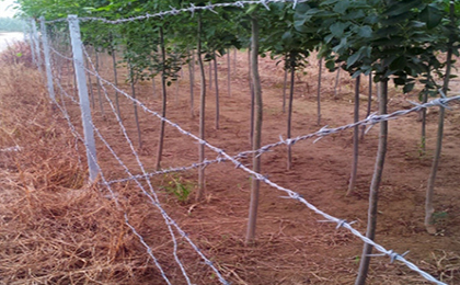 刺线刺丝围栏